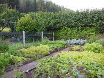 Il nostro orto.. sinonimo di qualità e freschezza!