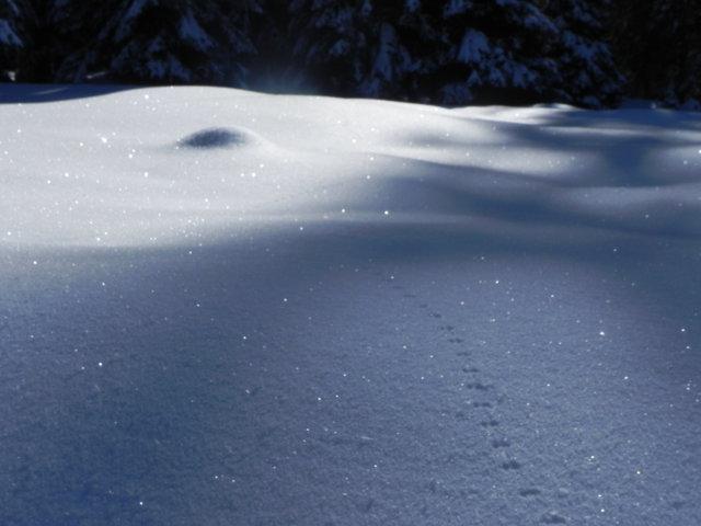 Un'Emiliana in Trentino